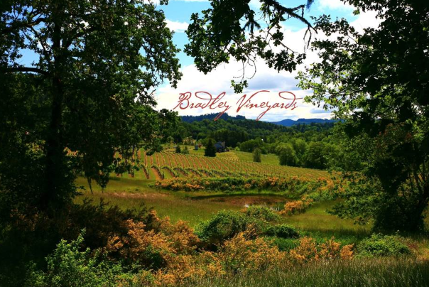 bradley vineyards in elkton oregon