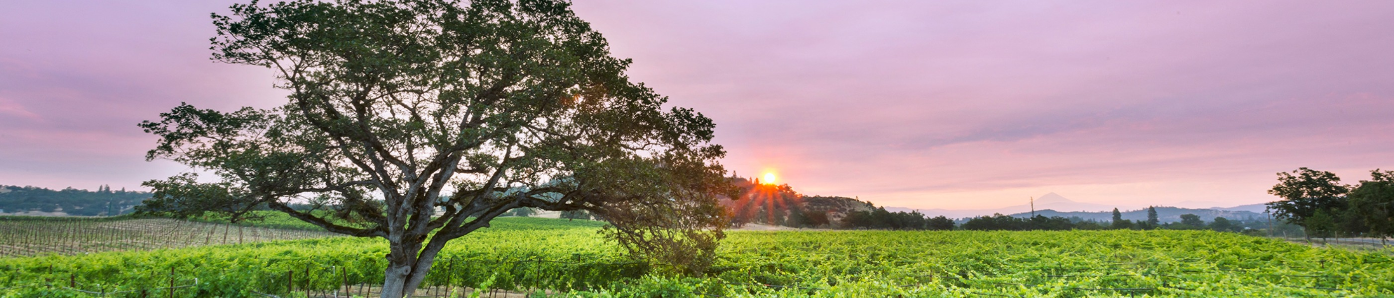Southern Oregon's breathtaking sunset over Agate Ridge Vineyards