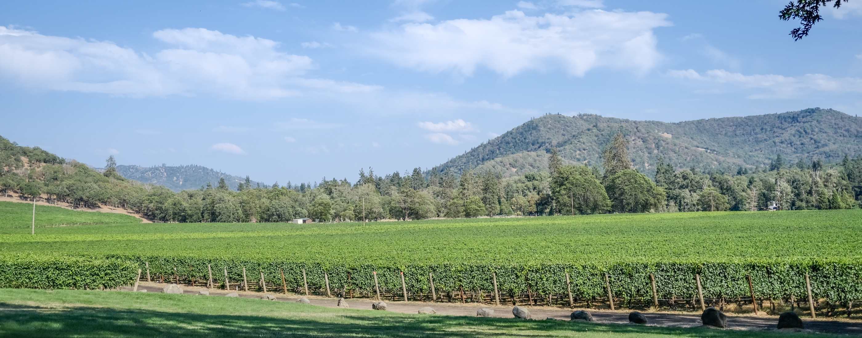 Rogue Valley WIne Country
