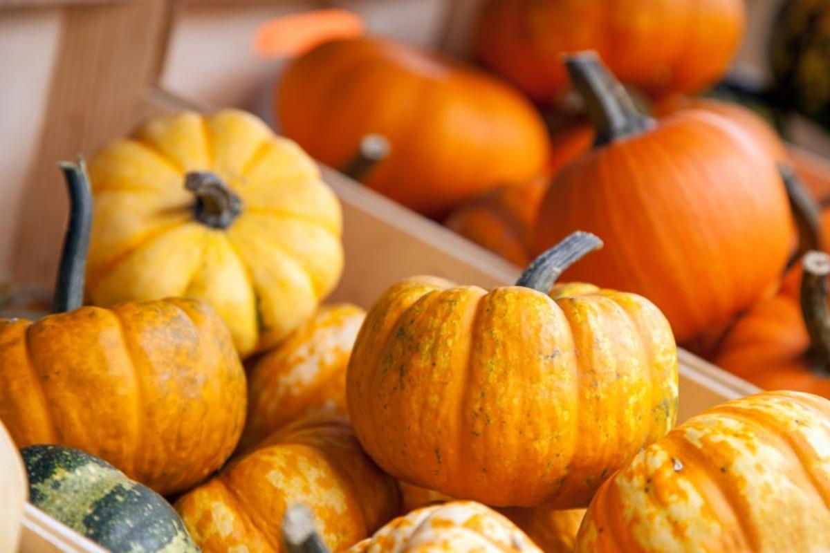 mini pumpkins, pumpkin, fall festivities, fall fun, activities, things to do in medford, medford events