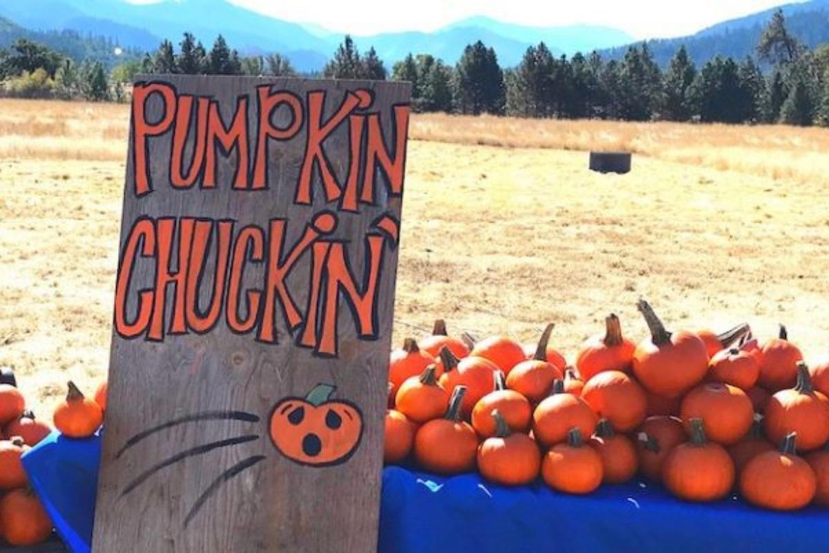 Longsword Vineyard, pumpkin patch, pumpkin chucking, mini pumpkins, fall fun, fall festivities, things to do in medford