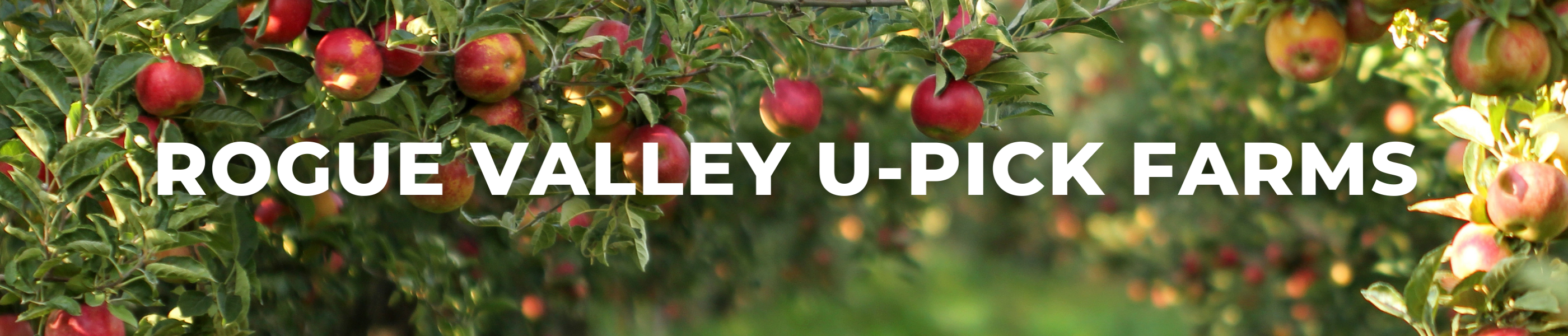 Rogue valley U-pick farms, agriculture in the rogue valley, things to do in Medford, fall fun, support local farmers, support local buisinesses, u pick, farming