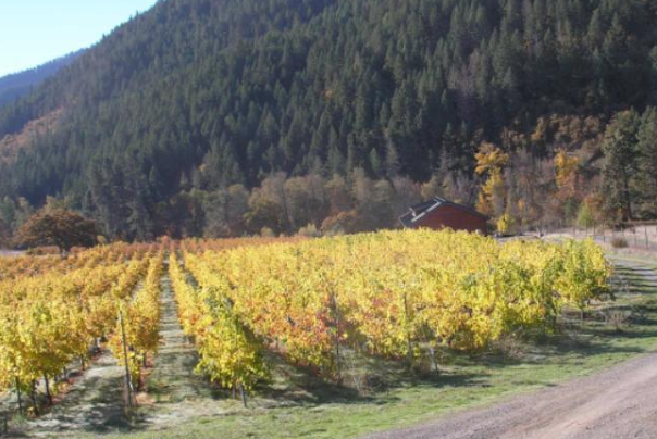 cricket hill winery in the fall in jacksonville oregon