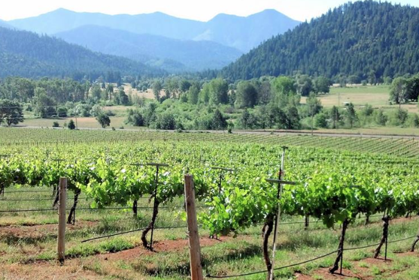 Deer Creek Vineyards