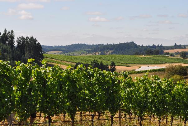 Del Rio Vineyards in Gold Hill, Oregon