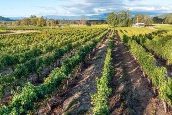 Foris vineyard