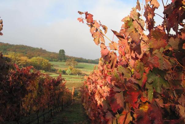 irvine roberts vineyard in ashland oregon