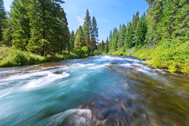 Rogue River is the perfect place for whitewater activities