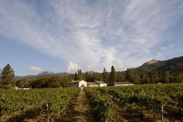 vineyard, winery, wine