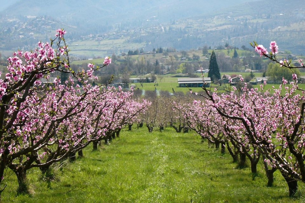 Valley View Orchard in Ashland Oregon